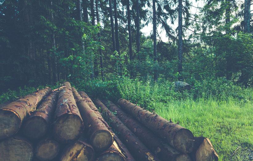 تصویر چوب درختان جنگل