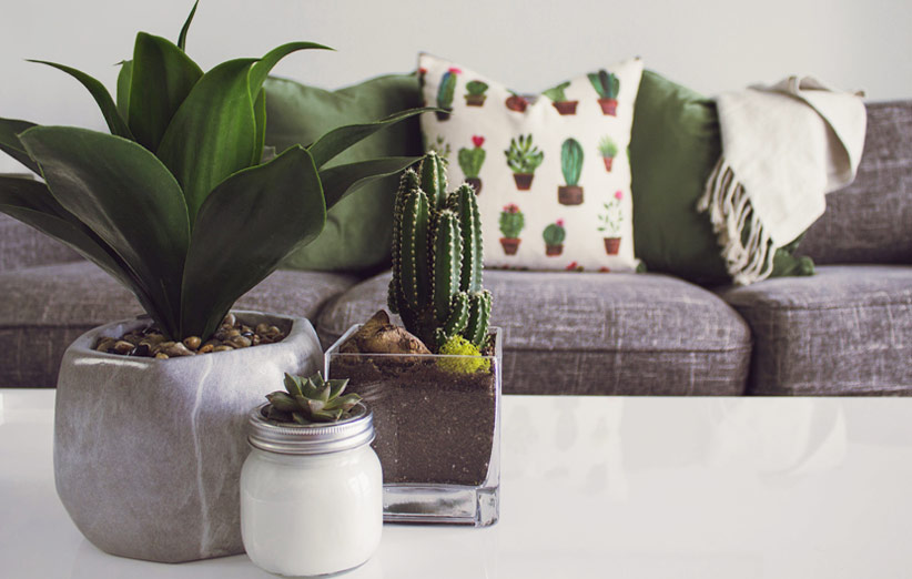تصویر گیاهان آپارتمانی