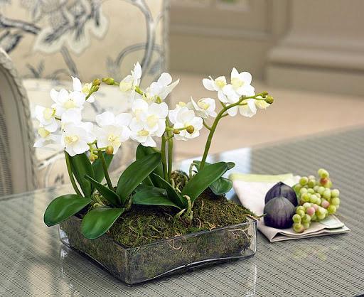 گل مصنوعی رومیزی
